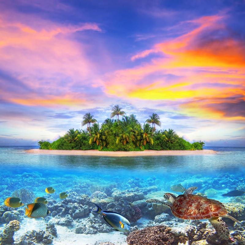 Tropical island of Maldives with marine life