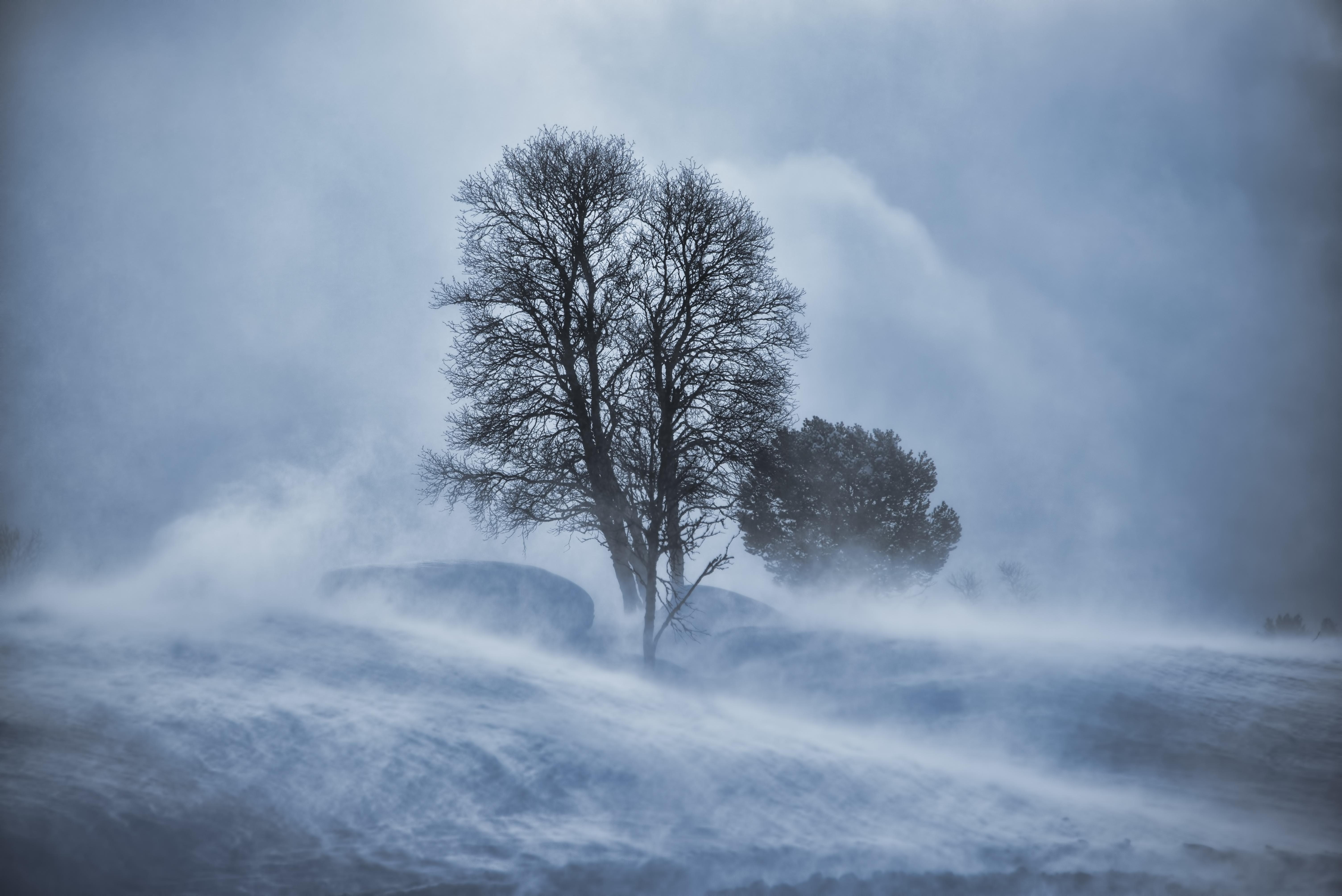 Tree in snow blizzard